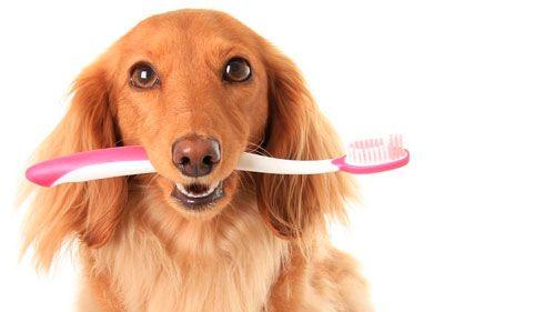 Чищення зубів і видалення зубного каменю у собаки
