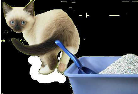 Чистота в домі