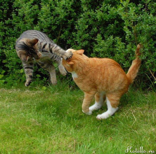 Що робити якщо кіт побився