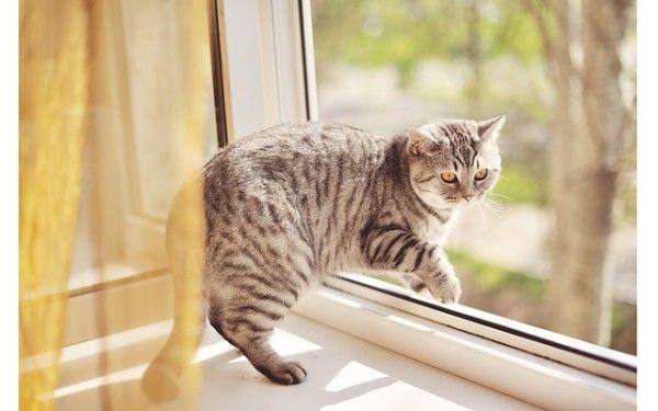 Кот прогулюється по підвіконню