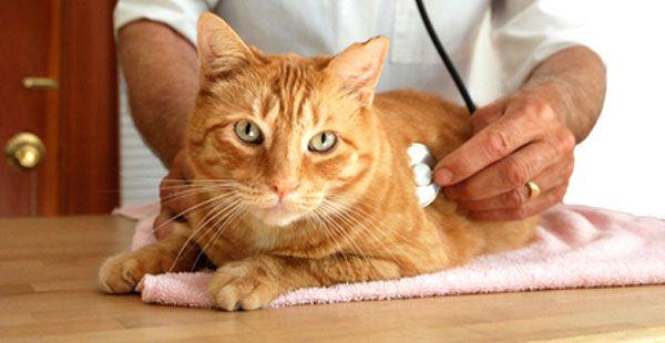 Кот на прийомі у ветеринара