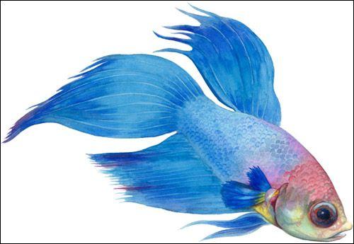 Що і як їдять риби?