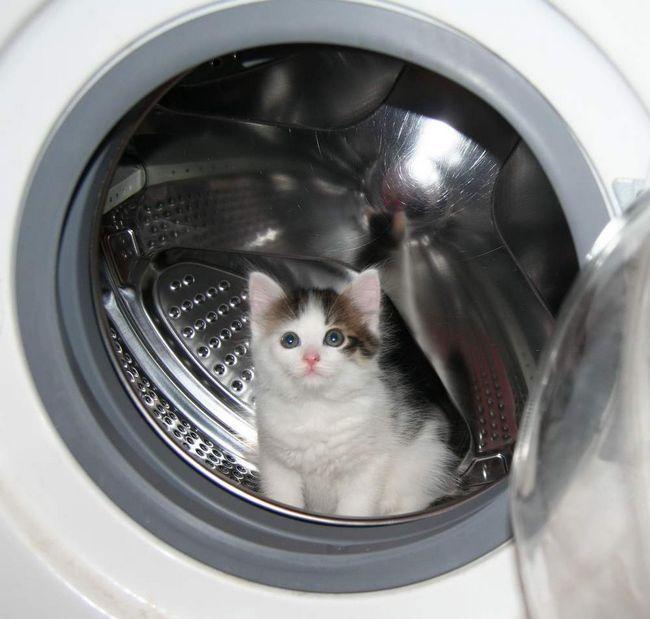 Що може загрожувати кішці в будинку: пральні машини і двері