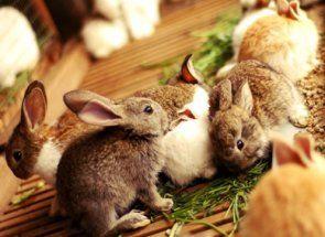 Що можна давати кроликам: найчастіші запитання