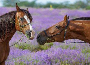 Що ми знаємо про коня: всі найцікавіші факти