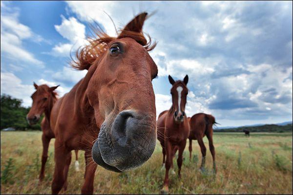 Цікава кінь дивиться в камеру