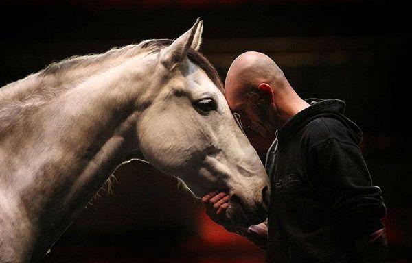 Людина і кінь крупним планом