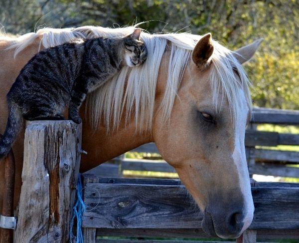 Спокійний кінь і задоволена кішка