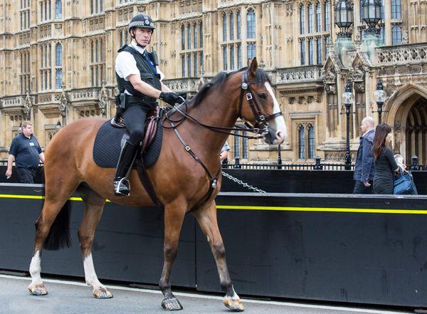 Поліцейський сидить верхи на коні