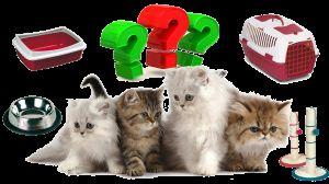 Предмети першої необхідності для кошеняти