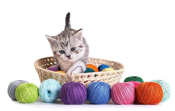 Що необхідно приготувати для кошеняти
