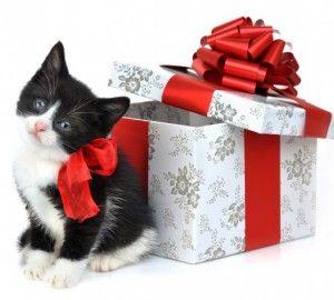 Що подарувати кошеняті