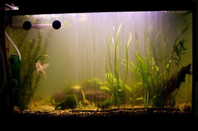 Щоб акваріум сяяв і радував - боремося з каламутною водою