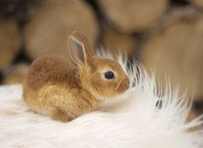 Декоративні кролики від а до я: все що потрібно знати власнику