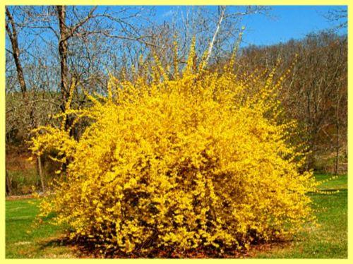 Декоративні рослини для саду багаторічні: фото і опис