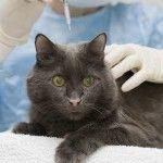 Дексафорт для кішок
