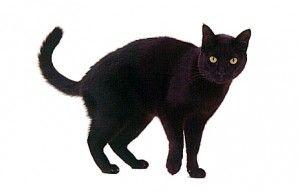 День Чорного Кота