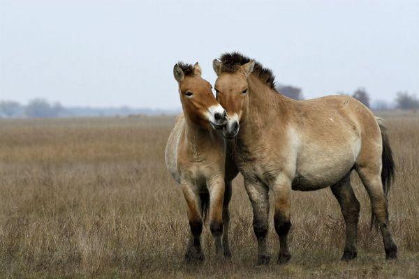 Двоє коней в степу