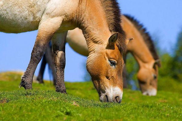 Голова коня крупним планом