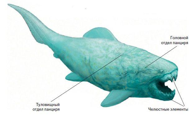 Девонські риби