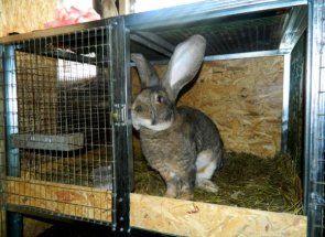 Дезінфекція клітин - запорука здоров`я кроликів