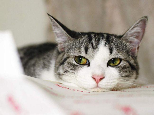 Те, як виглядає дерматит в конкретному випадку, залежить від індивідуальних реакцій кішки.