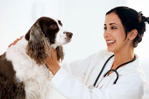 лікування саркоптоза у собак
