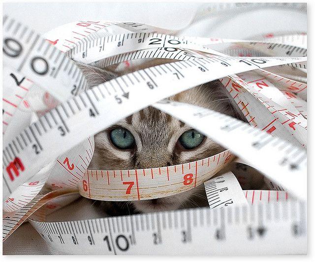 Дієта для кішок