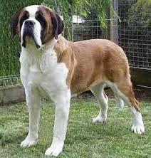 Дисплазія у собак - профілактика і лікування