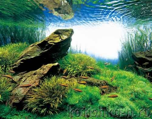Дизайн акваріума своїми руками - 40-х варіантів дизайну