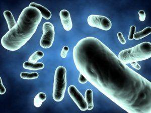 Призначення Байтрилу ® при інфекційних захворюваннях