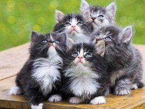 Небажаність призначення Байтрилу ® кошенятам