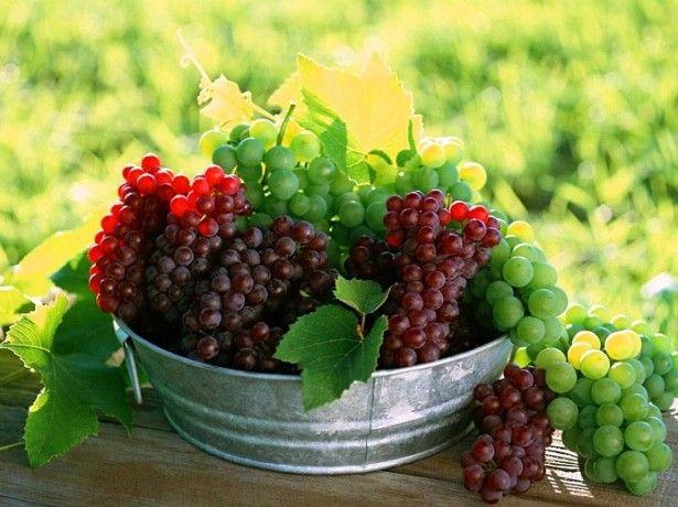 Що потрібно врахувати перед тим як готувати вино з винограду?