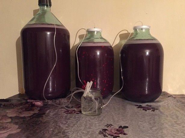 Що потрібно врахувати перед тим як готувати вино з винограду? фото
