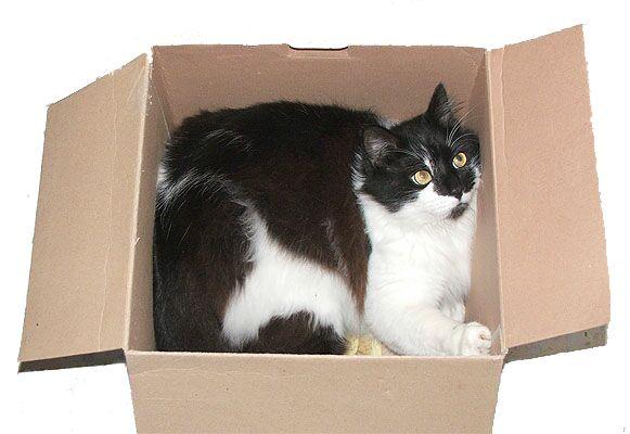 дресирування кішок