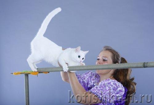 Дресирування кота: потрібне рух за винагороду, 5 кроків до успіху