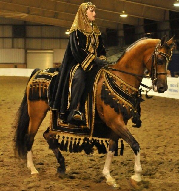 Англо-арабський кінь з вершником