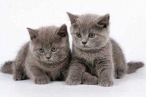 Дві кішки в будинку