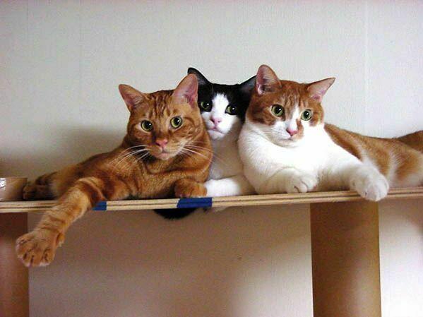 дві кішки