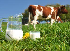Його величність молоко: склад, особливості та підвищення молочності корів
