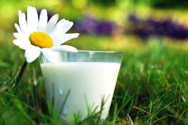 Стакан молока з ромашкою