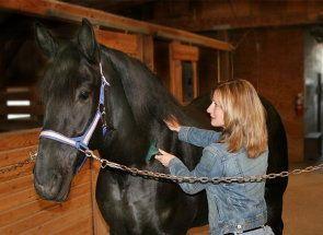 Якщо є у вас кінь: вчимося правильно доглядати