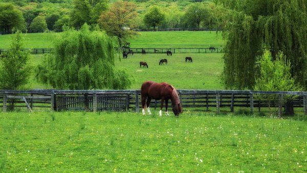 Коні на випасі в загоні