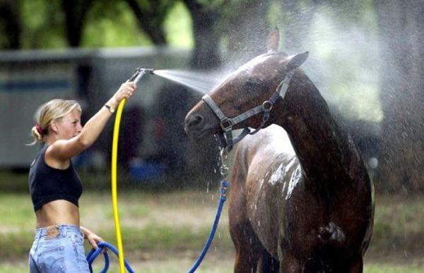 Купання коня з шланга