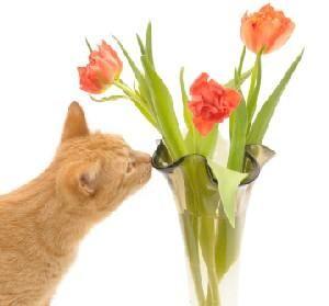 Якщо кішка їсть квіти