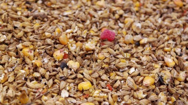 Зерна комбікорми для збалансованого харчування несучок