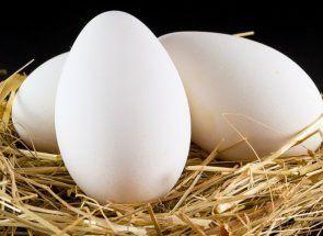 Чи є місце гусячим яйцям в раціоні людини?