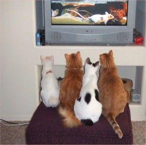 Фільм для кішок