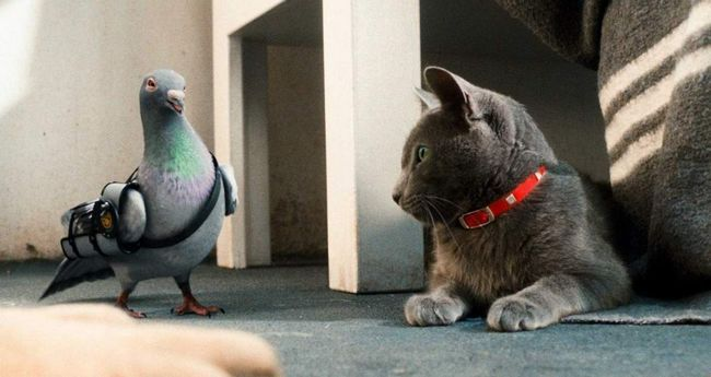Кішки проти собак: Помста Кітті Галор (Cats & amp; Dogs: The Revenge of Kitty Galore).