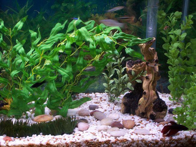 Фільтрація води в акваріумі